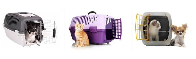 animais-transportes-de-cargas-bichos